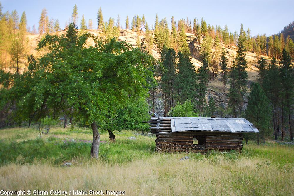Homestead, Salmon River, Frank Church River of No Return Wilderness, Idaho
