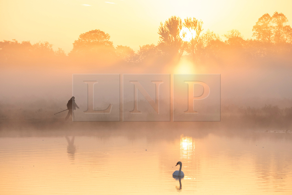 © Licensed to London News Pictures. 10/10/2018. London, UK. A man walks around a lake at sunrise in Bushy Park, south London. Forecasters are expecting unusually warm temperatures for October. Photo credit: Rob Pinney/LNP