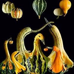 The Gourd Family