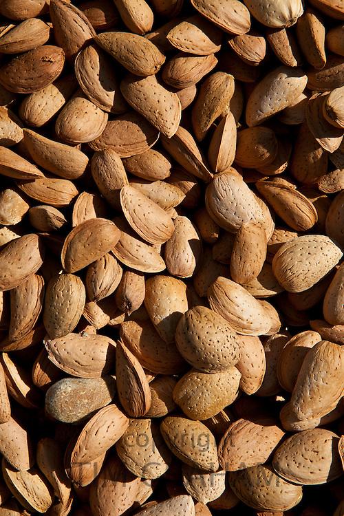 Fresh almonds on sale at food market in Bordeaux region of France
