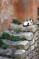 Steps to nowhere..but a high perch for a sleeping cat in Ragusa, Italy