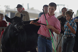 03 August 2017:  A young boy shows an angus cow 2017 McLean County Fair<br /> <br /> #alphoto513