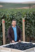 Cayuse harvest, Walla Walla AVA, Milton-Freewater, Oregon,