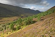Native woodland regenerating along glacial valley, Alladale Wilderness Reserve, Sutherland, Scotland.