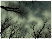 Artistic dramatic surreal  image of leafless trees and treetops in a cloudy moonlit sky at night time scary halloween like evening