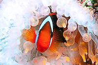 East Indonesia, Raja Ampat,