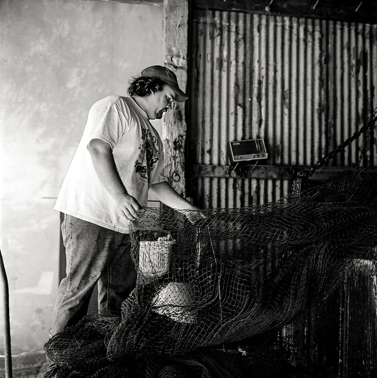 CA &quot;Rocky&quot; Magwood IV, a third generation South Carloina shrimp fisherman, dips a newly made net into a finishing solution. <br /> <br /> Magwood's Seafood, Mount Pleasant, South Carolina