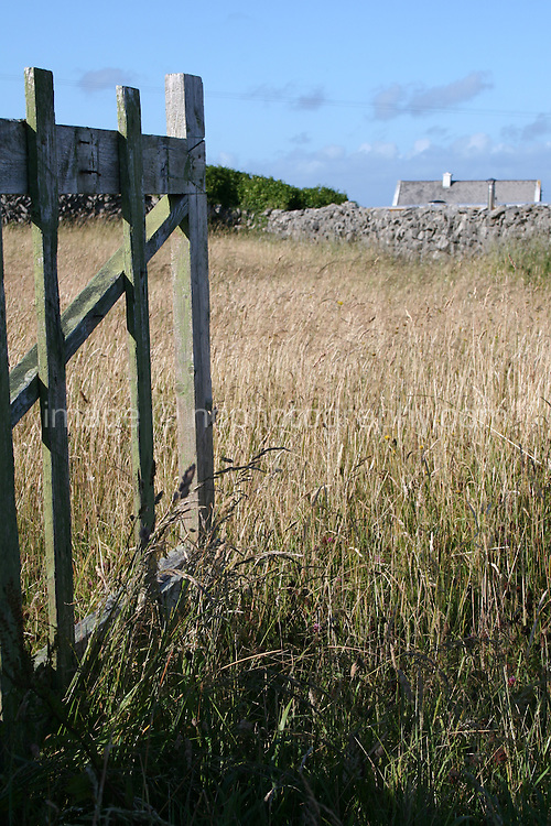 Gate leading into field with long grasses