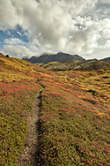 Trail in Ram Valley displays peak autumn coiors in Chugach State Park in Southcentral Alaska. Afternoon.