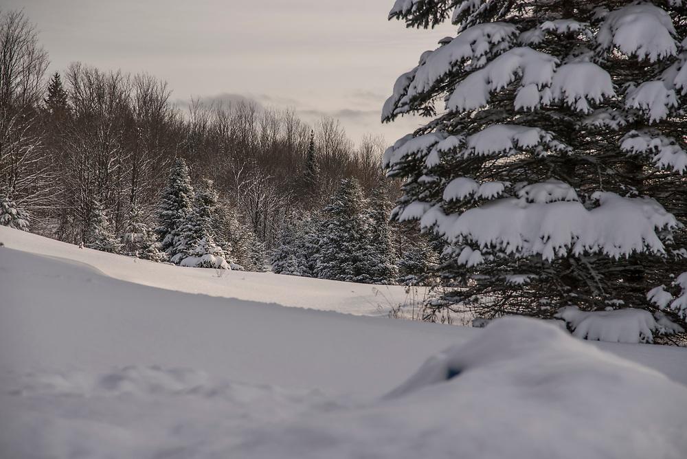 Winter scene in northern Michigan.