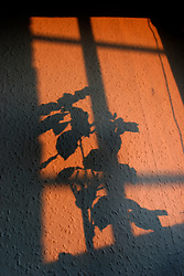 UK ENGLAND LONDON 29FEB04 - Shadows of window and plant on wall during sunset.<br /> <br /> <br /> <br /> jre/Photo by Jiri Rezac<br /> <br /> <br /> <br /> © Jiri Rezac 2004<br /> <br /> <br /> <br /> Contact: +44 (0) 7050 110 417<br /> <br /> Mobile:  +44 (0) 7801 337 683<br /> <br /> Office:  +44 (0) 20 8968 9635<br /> <br /> <br /> <br /> Email:   jiri@jirirezac.com<br /> <br /> Web:    www.jirirezac.com