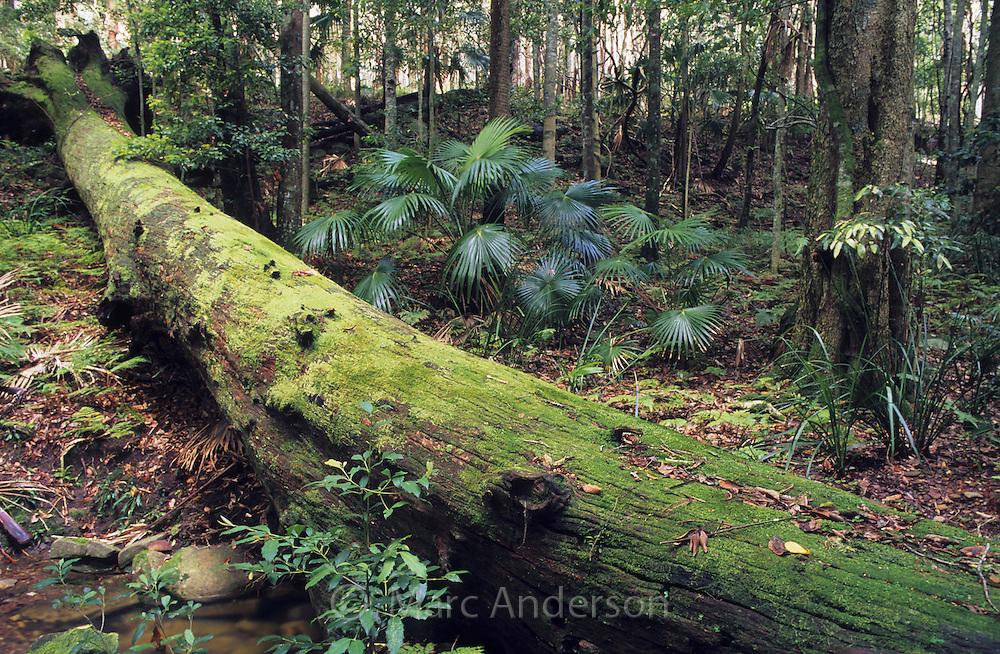 Fallen moss covered tree in a rainforest, Royal National Park, Australia.