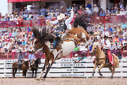Bareback rider Bradley Harter goes hangs on during the Bareback Championships at the Cheyenne Frontier Days rodeo in Frontier Park Arena July 26, 2015 in Cheyenne, Wyoming. Frontier Days celebrates the cowboy traditions of the west with a rodeo, parade and fair.