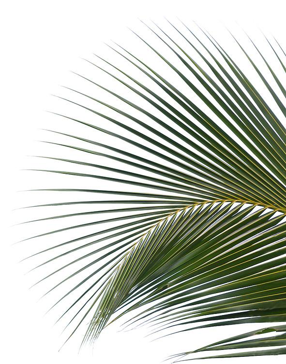 Palm leaf, Costa Rica