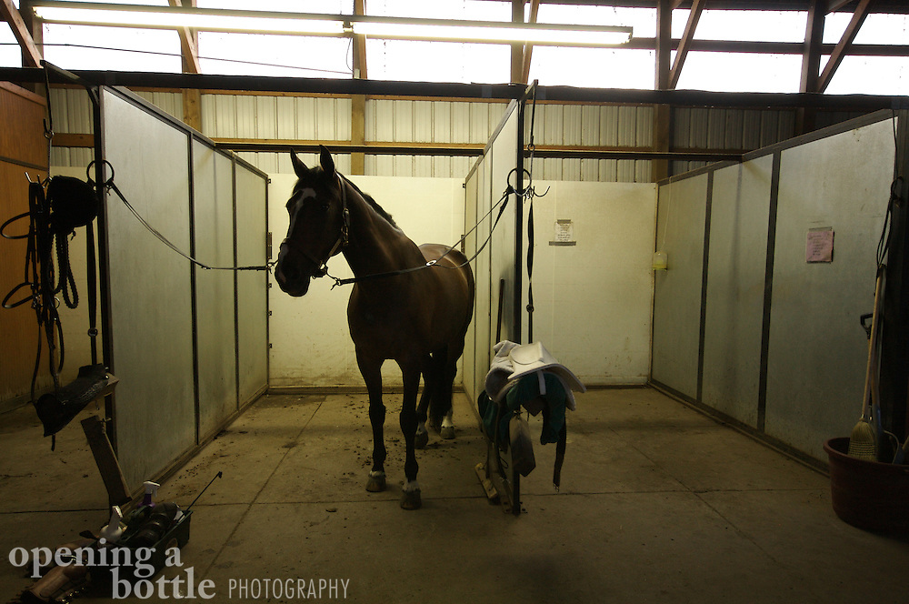 A thoroughbred horse waits to be saddled inside a stable.