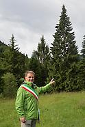 L'ALBERO DI SCURELLE DONATO AL PAPA S.FRANCESCO  PER IL PRESEPIO DEL VATICANO 2016