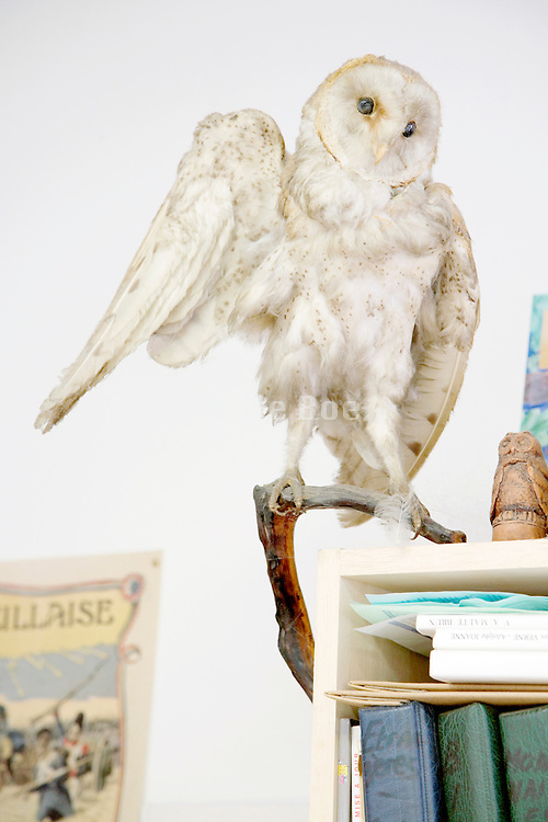 stuffed owl on the corner of a bookshelf