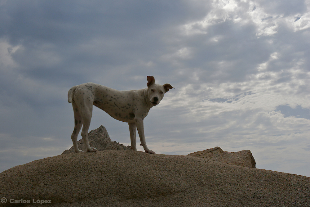 A dog in the top of a rock