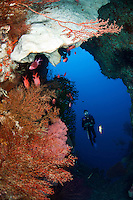 Diver, Sponges and Soft Corals in a deep reef cavern<br /> <br /> shot in Indonesia