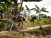 21 NOVEMBER 2010 - LEOGANE, HAITI: A boy rides his donkey on a trail in Leogane, Haiti, about 40 miles from Port-au-Prince. PHOTO BY JACK KURTZ