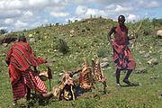 Kenya, Masai Mara, Masai (Also Maasai) Tribesman cooks meat on an open fire