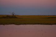 Saltwater marsh along the coast of South Carolina near Charleston.