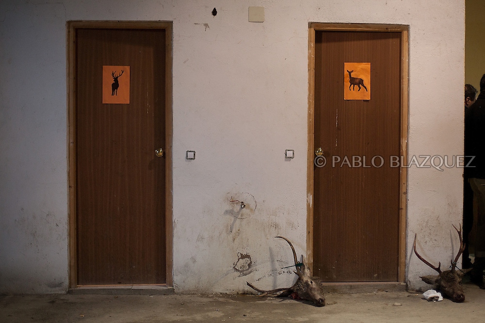 Two heads of deers lay on the ground next to male and female toilets in a warehouse after a hunting session in Carbajo on January 19 2013, in Caceres Province, Extremadura, Spain. .Caceres has a well preserved natural environment. Plenty of its surface is dedicated to deers and wild boars hunting, making this, an important part of its economy. But most of the land belongs to large landowners. .In Carbajo, people gather three times a year to hunt deers and wild boars. In the past, they used to hunt for eating, but now days, they practice it as an sport and a social event. Then, they sell what the catch as wild game meat.