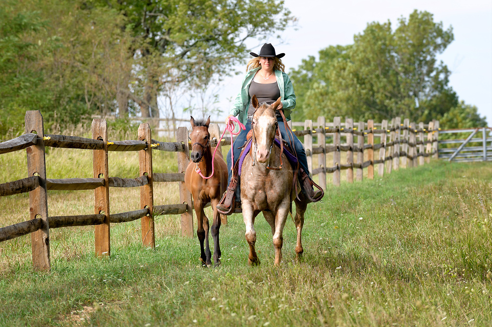 """A cowgirl on horseback doing ranch work leads a young foal along while trotting down the fence line in a beautiful country landscape. Her horse is an Appaloosa and the colt is a purebred Arabian. This is an exercise for the little one to get him out of the pasture and into new territory while learning to follow along on a lead rope, trusting the rider. It's often called to """"pony"""" another horse along as you ride."""