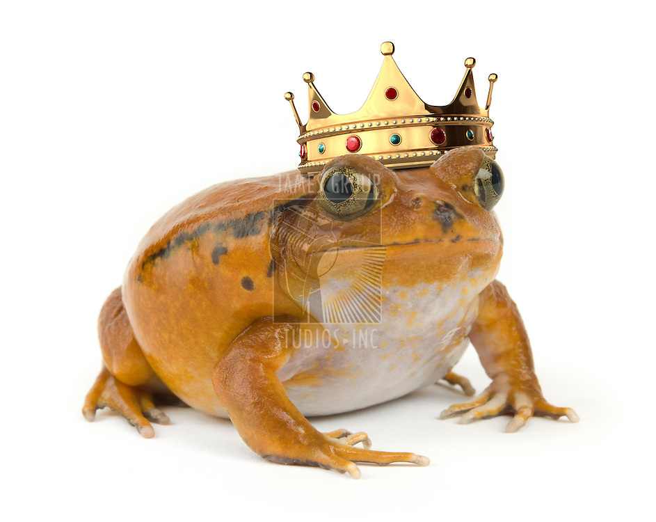 Orange tropical frog wearing a crown on a white background