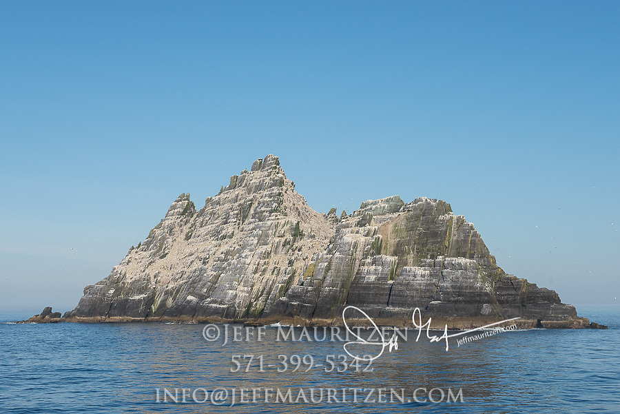 Northern gannets nest on the island of Little Skellig, County Kerry, Ireland.