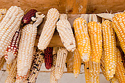 "26 APRIL 2005 - SAN CRISTOBAL DE LAS CASAS, CHIAPAS, MEXICO: Corn drying under the eaves of a home in the Chumalan Indian community of Ucuntic  near San Cristobal de las Casas, Chiapas, Mexico. The Catholic Church in the Chiapas highlands is facing a threat from evangelical Protestant churches, which are experiencing explosive growth, and from ""traditionalist"" Catholic churches, which are not affiliated with the San Cristobal diocese and are controlled by local politicians and powerful indigenous leaders affiliated with the politicians. The traditionalists burn down churches and chapels affiliated with the diocese, threaten the priests and put indigenous men who worship with the diocese in jail.  PHOTO BY JACK KURTZ"