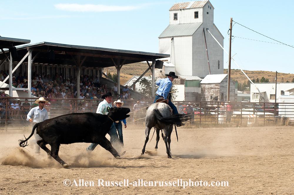 Wilsall Ranch Rodeo, Montana, Wild Cow Milking, Cleve Swandel, Cassie Woosley, Kurt Mraz, Cody Wilsey, Lazy SR Ranch..