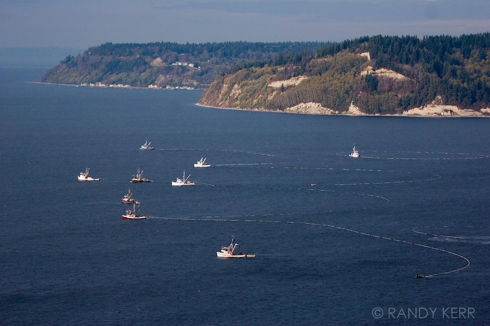 Purse Seiners off of Posession Point