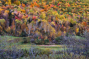 Abstract of colorful autumn trees on a mountainside,, Killington, Vermont, USA