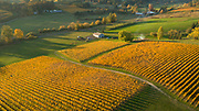 Fall brilliance, Arilyn Vineyards, Willamette Valley, Oregon