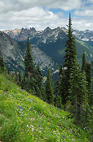 North Cascades seen from Summit of Maple Pass, Washington
