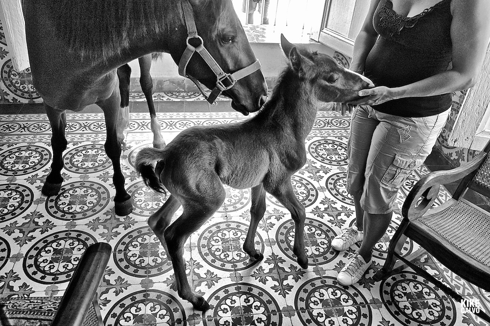 Newborn baby horse at the living room of horse whisperer Julio MuÒoz