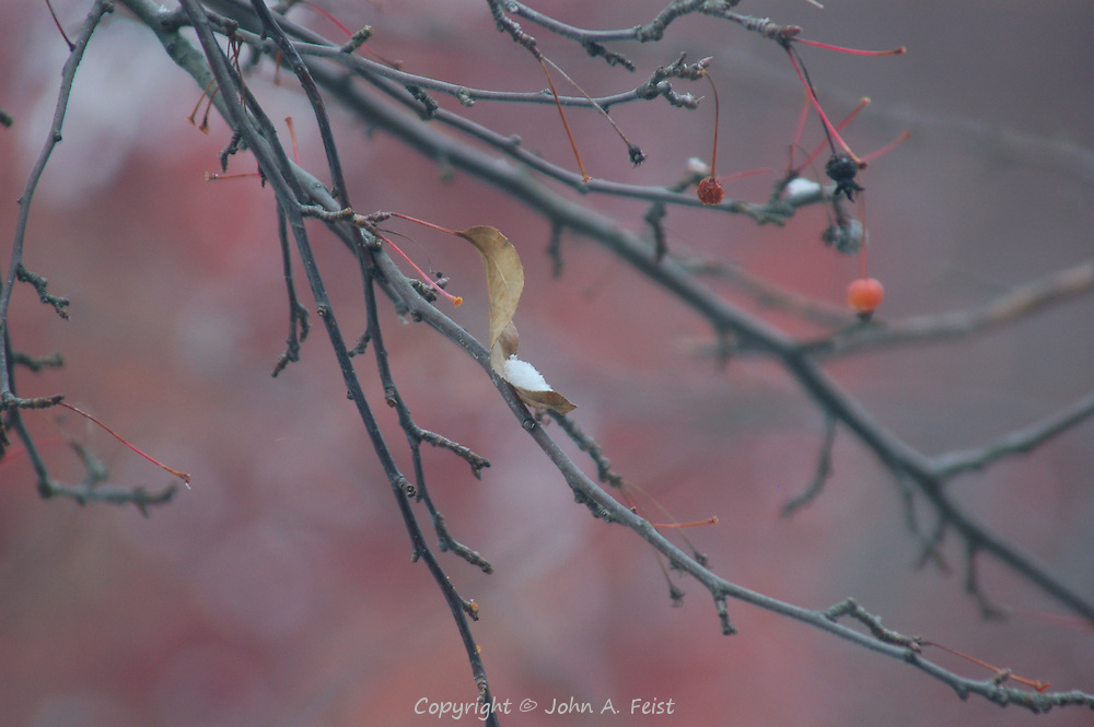 It's early winter, but the tree outside my window still has a few berries, reminders of summer.  Hillsborough, NJ