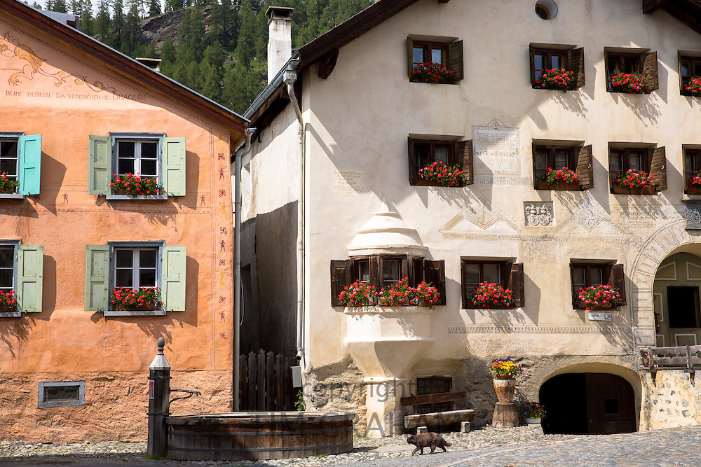 In the Engadine Valley in village of Guarda cat strolls past old painted stone 17th Century buildings, Switzerland
