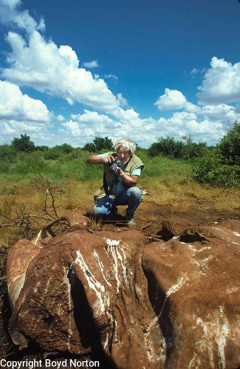 Boyd Norton photographing elephant killed by poachers, Tsavo National Park, Kenya