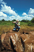 Boyd Norton photographing elephant killed by poachers, Tsavo National Park, Kenya