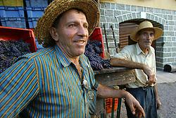 Seu Ernesto Possamai (d) e Jurandir Possamai durante a colheita da Uva, no municipio de Bento Gonçalves, serra gaucha.FOTO: Jefferson Bernardes/Preview.com