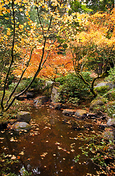Autumn brings changing color to Portland's famous Japanese Tea Garden.  This quiet pond is part of the Natural Garden area.