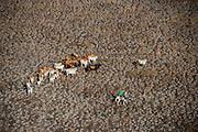 Amerindian Cowboy<br /> Dadanawa Ranch<br /> Savanna <br /> Rurununi<br /> GUYANA<br /> South America