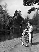 """08/03/1959<br /> 03/08/1959<br /> 08 March 1959<br /> Miss Therese O'Reilly, harpist. Tuning her Cork made """"Brian Boru"""" harp for St. Patrick's Day was 20 year old Dublin Typist Miss Therese O'Reilly. One of  her harps was over a hundred years old."""