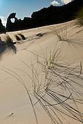 Pingao lines the coastal sand dunes at Keyhole Rock, Aramoana, New Zealand