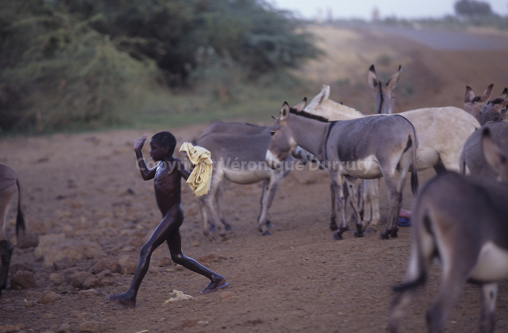 LITTLE DONKEYS KEEPER, NIGER