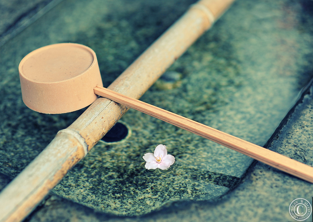This image was taken at a small hidden away Shinto Shrine in Tokyo. The shrine is tucked away between large buildings and has only 1 Cherry blossom tree. This is one of the fallen blossoms floating in a sacred water drinking trough.