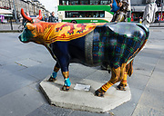 Painted life-sized fiberglass Edinburgh Rugby Kyloe Cow, at Kyloe Gourmet Steak Restaurant, 1-3 Rutland Street, in Edinburgh, the capital city of Scotland, United Kingdom, Europe. First mentioned in the 500s AD, Highland cattle (Scots: Heilan coo, slang: curly coo) have long horns and long wavy coats and are primarily for meat. They originated in the Highlands and Western Isles of Scotland.