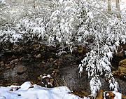 Snow on tree over creek